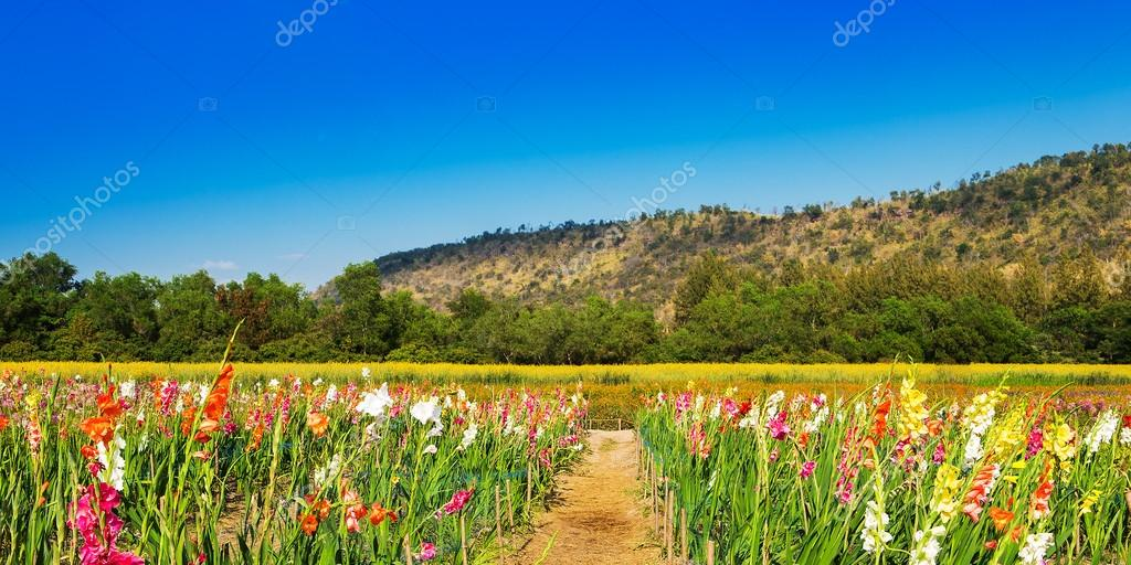 Meadow filled with wildflowers in the Utah mountains
