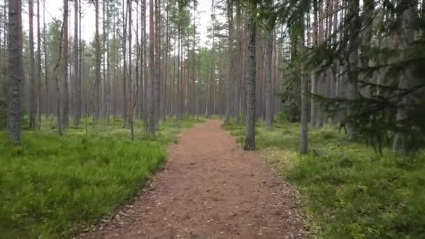 Pomalý fotoaparát pohybující se podél borovicové lesní cesty na podzim