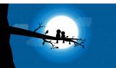 vector birds with the moonlight