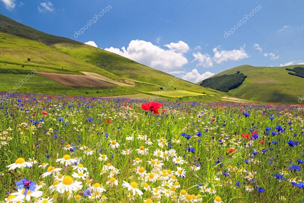 Flowery plain