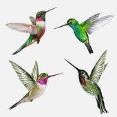 Nastavit čtyři malý pták kolibřík, vektorové ilustrace