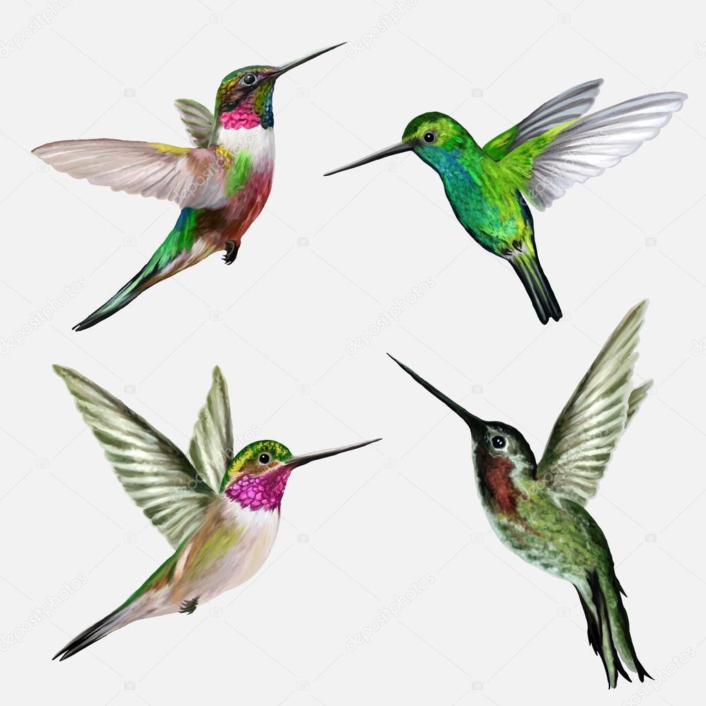 Set four small bird hummingbird, vector illustration