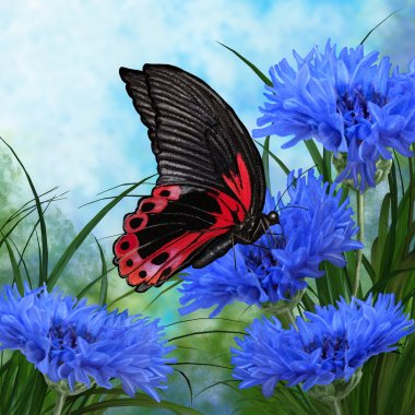 big black butterfly sits on a blue cornflower in a forest glade