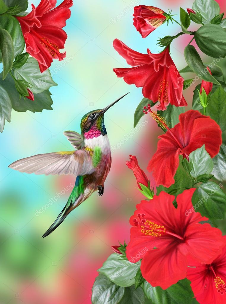 Colibri De Petit Oiseau Sur Un Hibiscus De Fond Dune Floraison