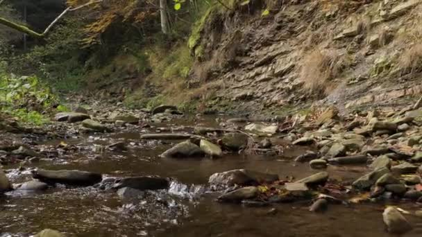 Carpathian forest. Small mountain river in the wild forest. Top aerial close up video. Wild Ukrainian nature and landscape. Traveling around Ukraine. Holidays in the forest