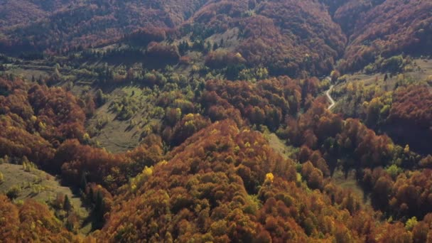 Amazing aerial view of the wild Carpathian forest. Morning in the forest. Top aerial view. Colorful trees from above. Ukrainian wild nature and landscape