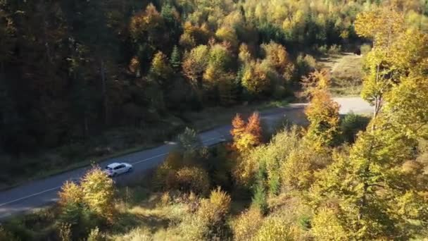 Autumn in the wild Carpathian forest. Drone flying over the golden forest with amazing background. Ukrainian wild nature and landscape. Vehicle road trough the wild autumn forest. Top aerial view. Drone 4k video. Amazing colorful trees.