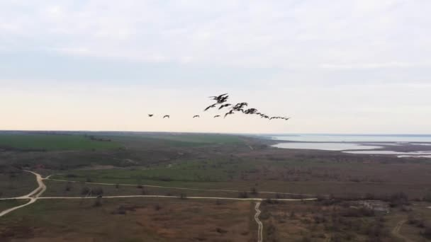 A cinematic drone shot of a flock of wild ducks flying south in the fall. Incredible rare drone footage. Wildlife of our planet. Top aerial close up video. Discovery our planet.