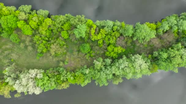 An incredible top view of a green island in the middle of a Ukrainian river. Rare and beautiful drone footage