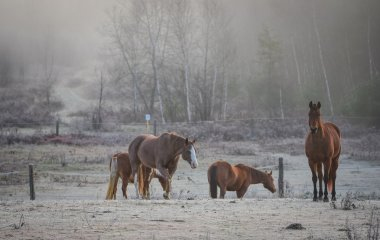 Horses, mares and stallions in their corral.