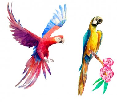 watercolor parrots o