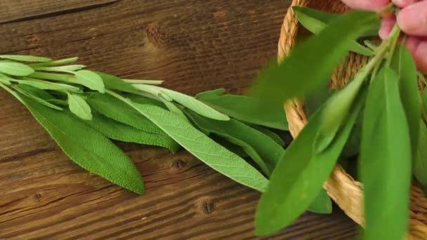 Gyógynövényismeret. Friss zsálya, fa tábla