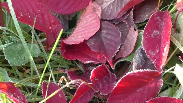 Červené listí ze stromů