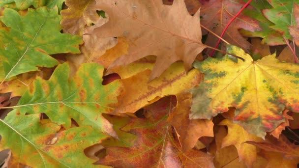 Gialli foglie che cadono dagli alberi