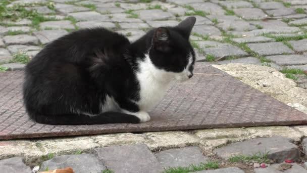 Osamělý koťátko, posezení v zahradě