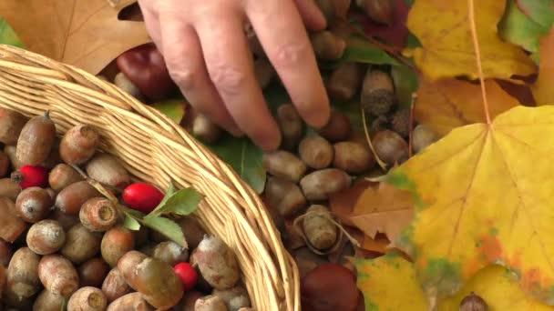 Podzimní pozadí - kaštany, žaludy