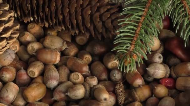 Podzimní dary: kaštany, šišky, žaludy