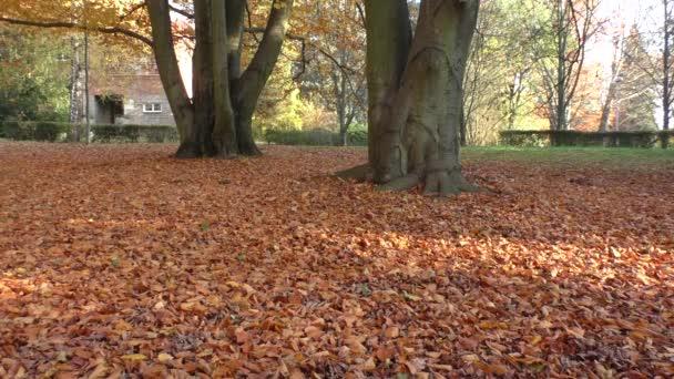 rozhledny spadaného listí na stromech v parku, podzimní scény