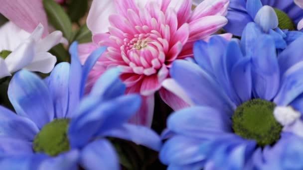 Jasná, svěží kytice pestrobarevných chryzantémů, sedmikrásek. Přiblížení