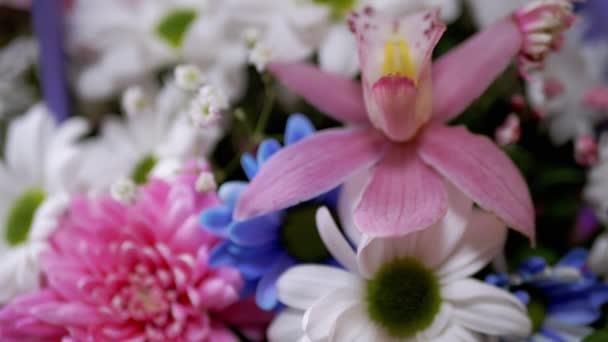 Jasná, svěží kytice pestrobarevných chryzantémů, orchidejí, sedmikrásek. 4K