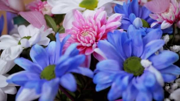 Jasná, svěží kytice pestrobarevných chryzantémů, sedmikrásek. 4K. Detailní záběr
