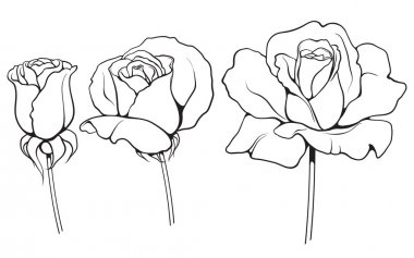 graphic roses set 02