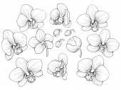 Fényképek grafikus orchidea
