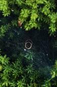 esküvő gyűrű-a pók hálójában