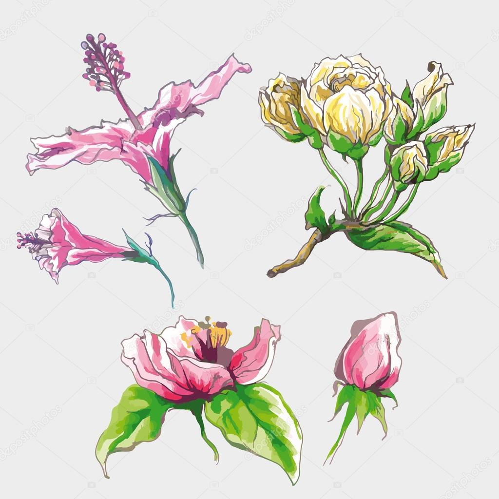 Spring Flower Buds Set Stock Vector Magnolijathree 70909367