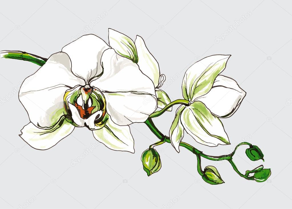 Decorative orchid flower branch