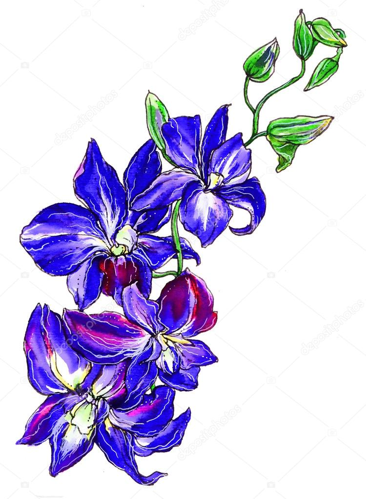Blue Purple Orchid Flowers Stock Photo Magnolijathree 96129530