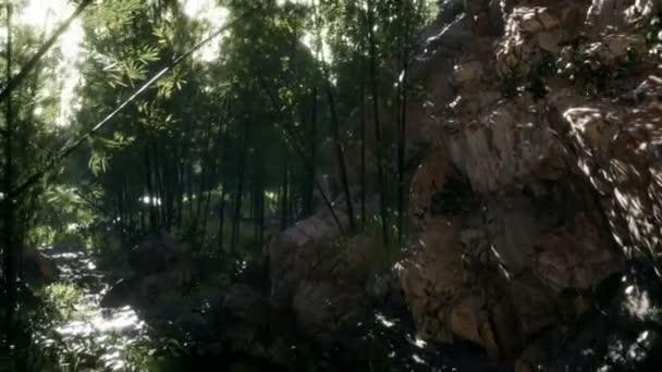 Svěží zelené listy bambusu u břehu rybníka s kameny