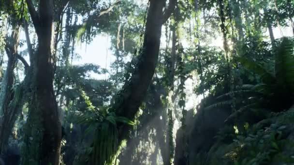 Nebliger Dschungel-Regenwald im Nebel