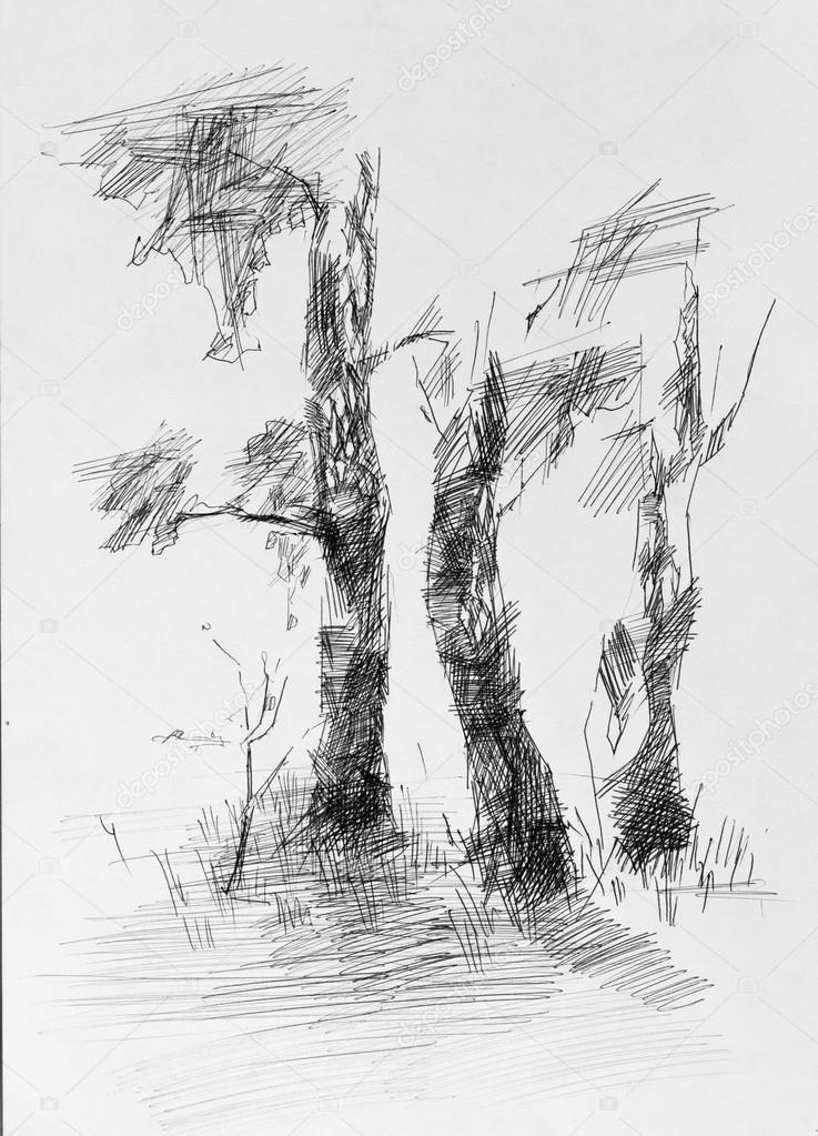 Imágenes Arboles Para Dibujar Secos árbol Dibujo A Lápiz Foto