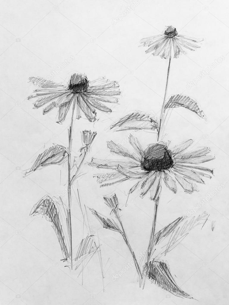 Flowers pencil sketch stock photo