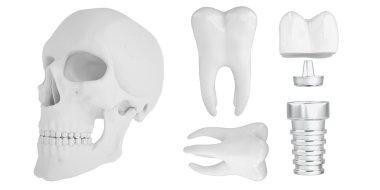 Anatomic human scull24