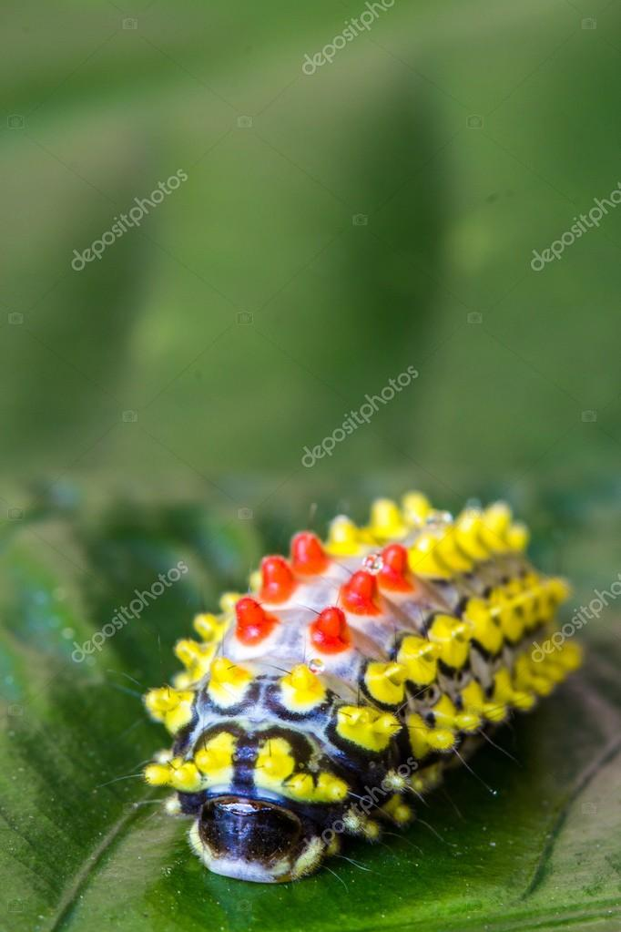 Colorfull butterfly worm