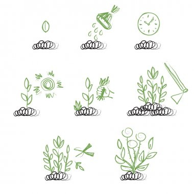 Sequence of growing a plant