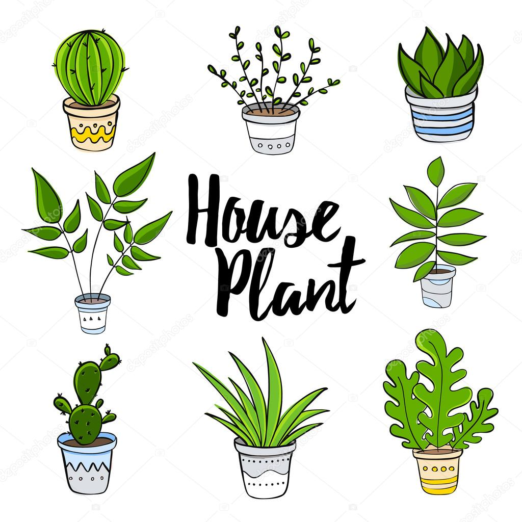 House Plants Hand Draw Set Vector Image By C Villis Vector Stock 124107966