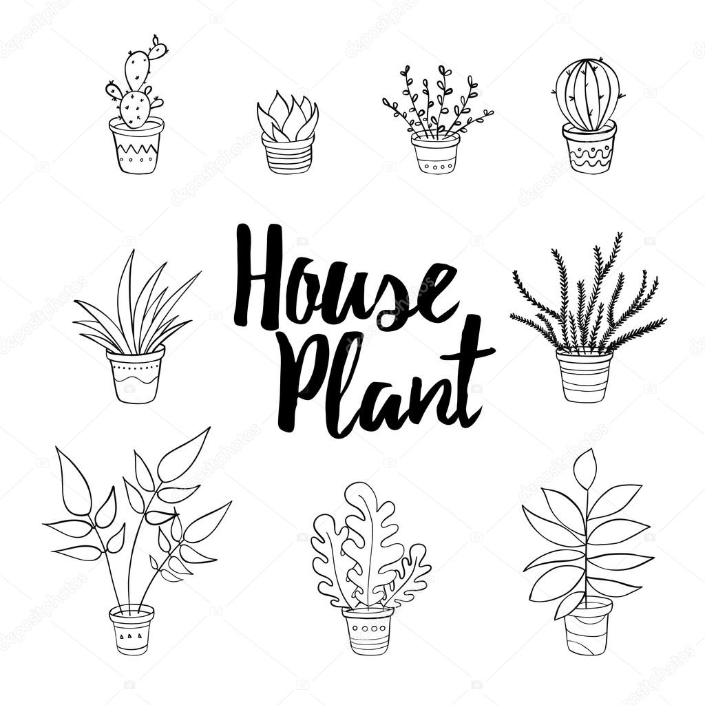 house plants drawing. hand draw set u2014 vector by villis house plants drawing a