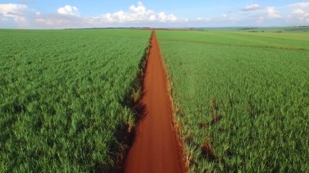 Sklizeň cukrové třtiny v slunečný den v Brazílii - letecký pohled
