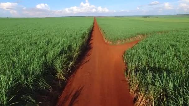 Cukornád aratás a napsütésben Brazíliában - légifelvételek