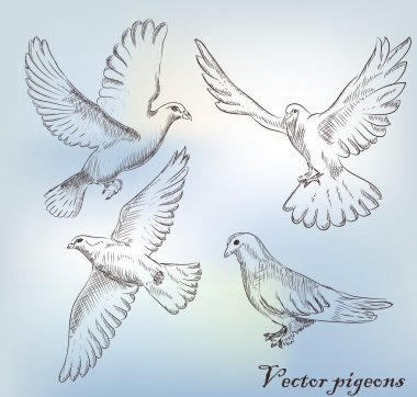 Set of different hand drawn pigeons