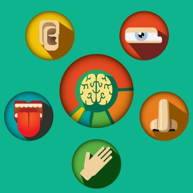 Five senses concept with human organs icons and brain in cogwheels vector illustration