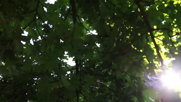 slunce svítí mezi stromy