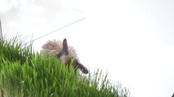 Velikonoční zajíček zelený jarní trávy
