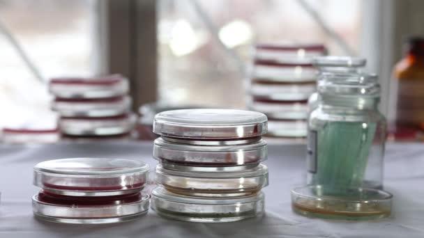 Technik třídění Petriho misek v lékařské laboratoři