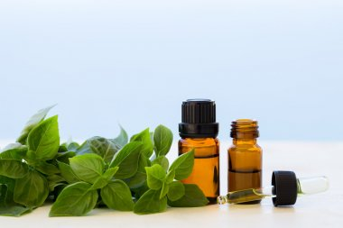 Basil essential oils