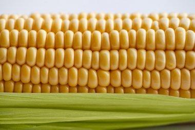 Golden sweet corn