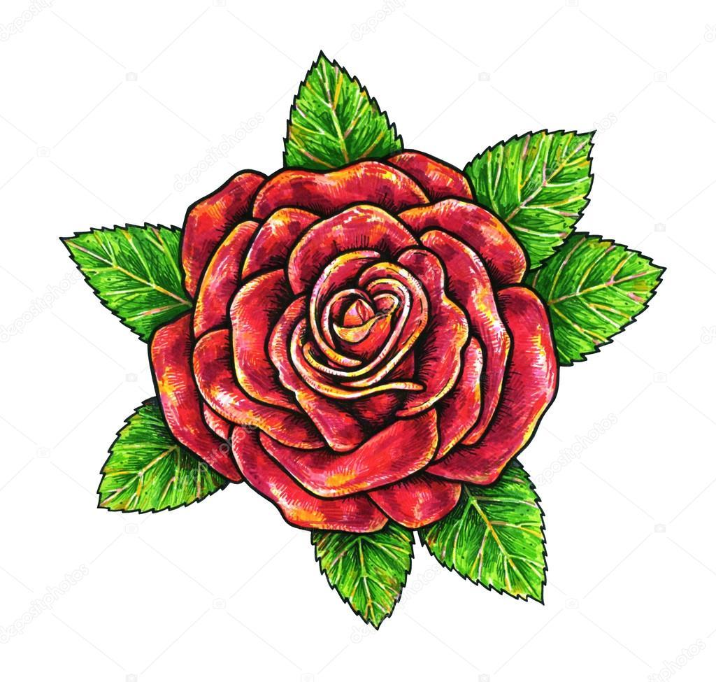 Dessin de rose rouge galerie tatouage - Signification des roses rouges ...